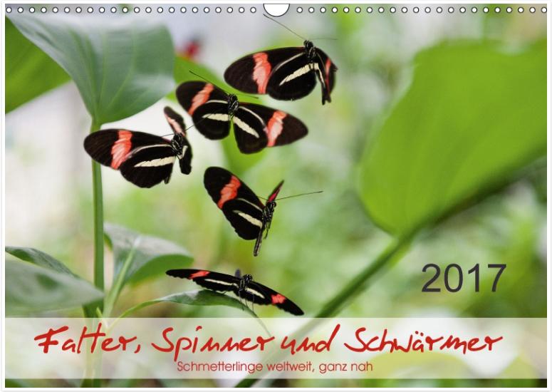 NEU_Falter Spinner und Schwaermer